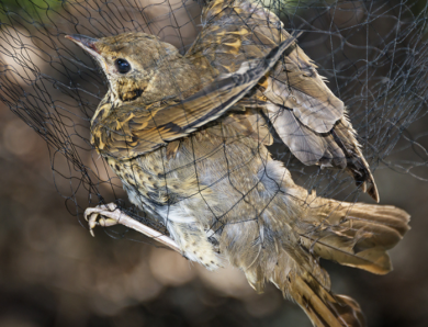 EU issues France with a warning over its bird hunting practices