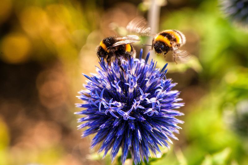 Today is World Bee Day!